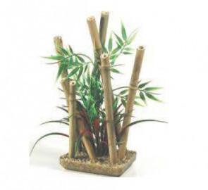 Rastlinka bambus
