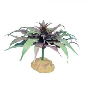 Terárijná rastlina Star kaktus