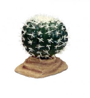 Terárijná rastlina Barrel kaktus